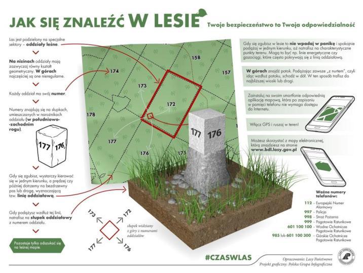 Na obrazku grafika pokazująca słupek oddziałowy w lesie i jego funkcje.